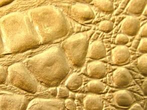 Gold Crocback