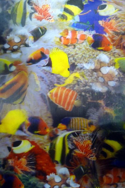 """Lenticular Sheets 14 1/2"""" x 19"""" - Little Fish 3D"""
